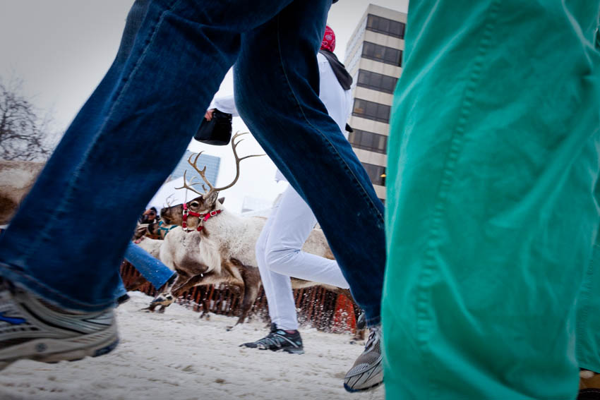 Running of the Reindeer, Fur Rondezvous winter carnival, Anchorage